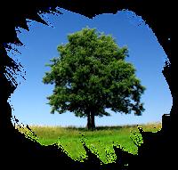Ağaçlarla İlgili Mucizeler