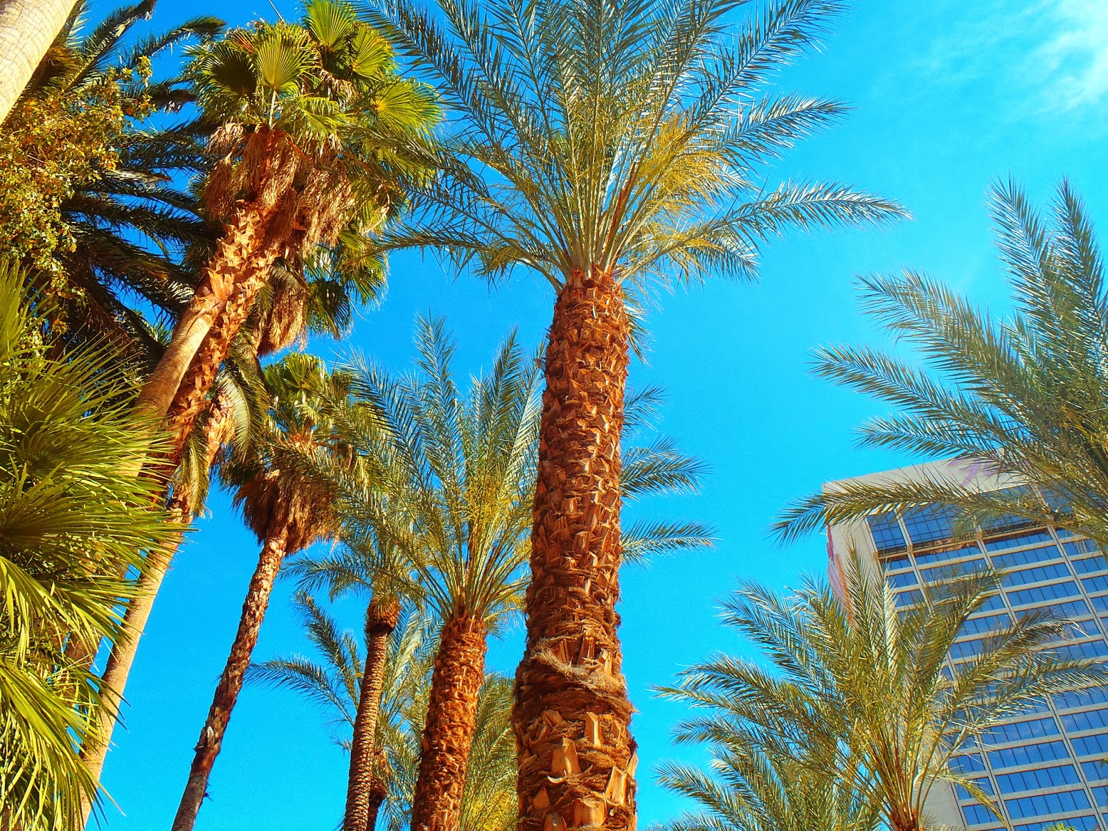 palm trees with blue sky in the background
