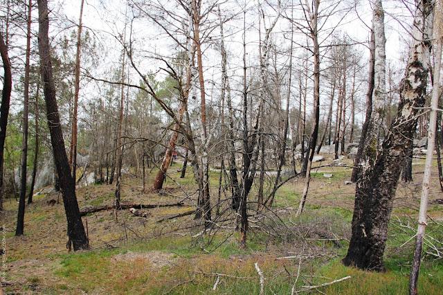 Reprise de la végétation à la JA Martin dans l'année qui suivi l'incendie de 2014