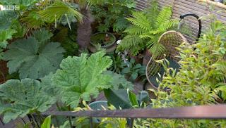 James Lester garden