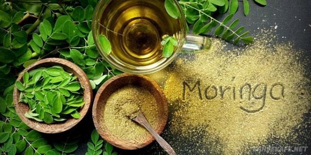 moringa ağacı faydaları nelerdir - www.kahvekafe.net