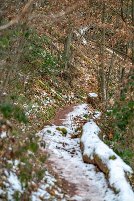 Blättersbergweg Rhodt  Winterwandern Südliche Weinstraße  Rietburg - Villa Ludwigshöhe - Edenkoben 08