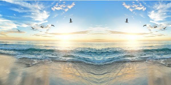 صوت امواج البحر طيور النورس