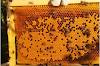 """Το """"στέγνωμα"""" του μελισσιού και η λύση στο πρόβλημα του Καλοκαιριού..."""