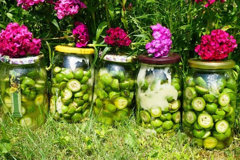 przepis na syrop z zielonych orzechów włoskich i miosu lekarstwo domowe