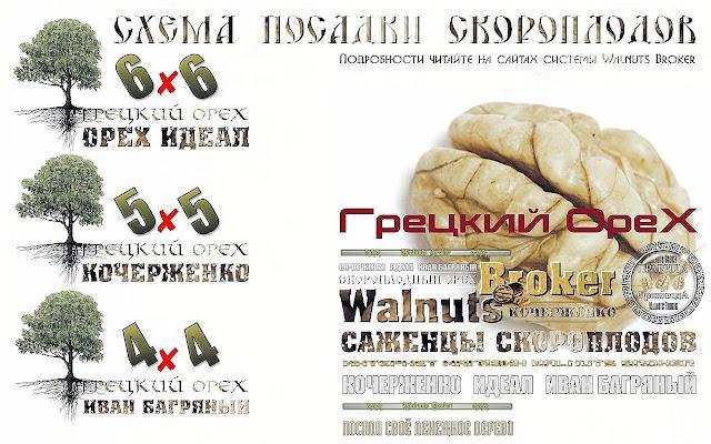 Как правильно посадить саженцы грецкого ореха Идеал, Кочерженко, Иван Багряный