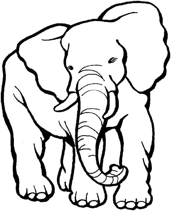 Himpunan Hewan Berkaki Empat : himpunan, hewan, berkaki, empat, Gambar, Mewarnai:, Sketsa, Binatang, Berkaki, Empat