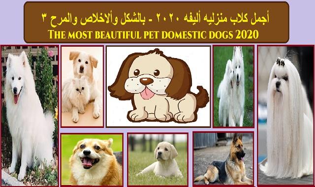 اجمل كلاب 2020 - بالشكل والمرح والاخلاص (3)