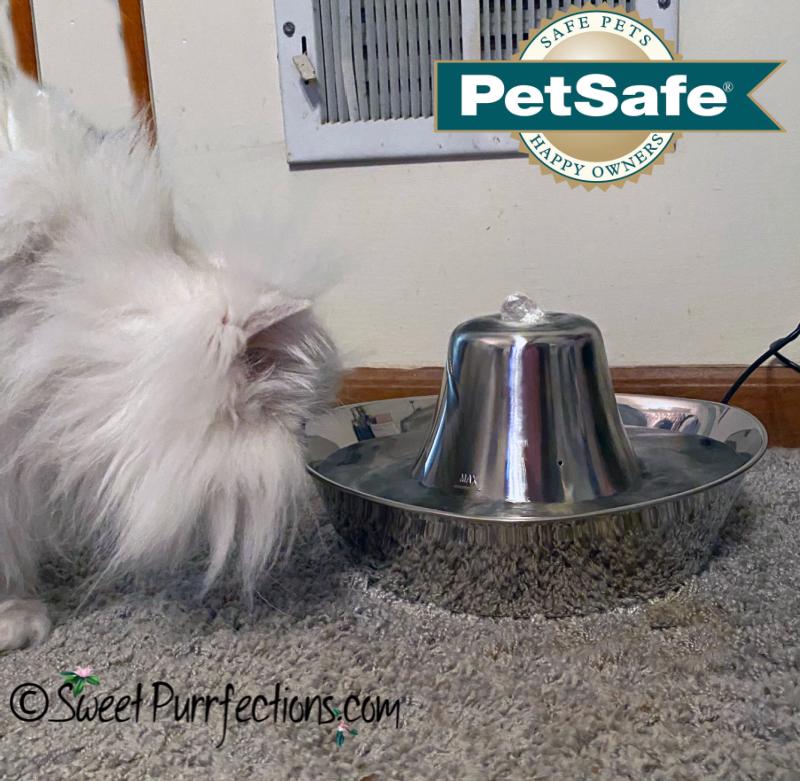 silver Persian cat, beside the Seaside Pet Fountain