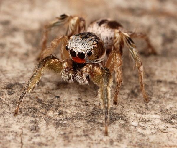 https://www.bioorbis.org/2015/06/as-aranhas-saltadoras-visao-em-tres.html