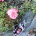 Mi neceser de otoño: regalito de sephora y actualización