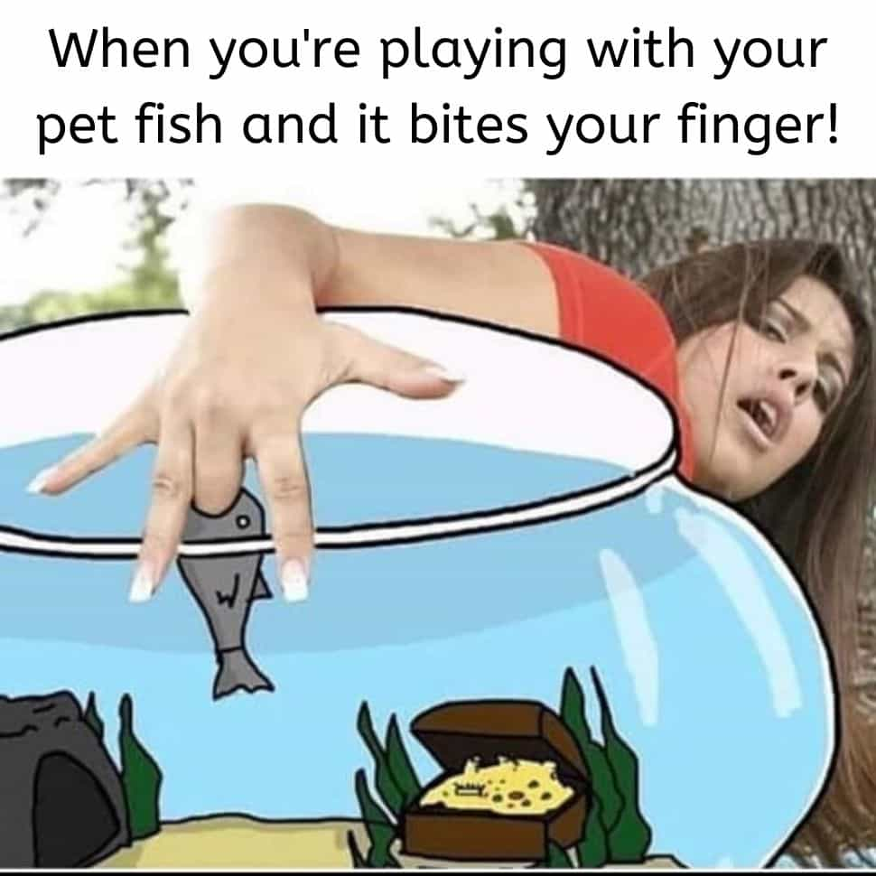 when-you-play-with-your-pets-and-bits-your-finger-funny-memes