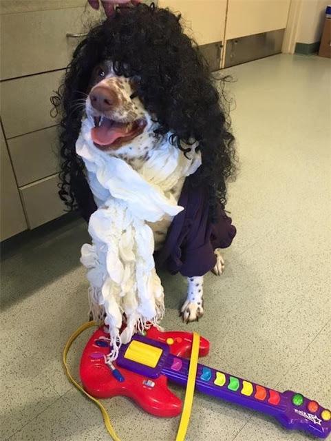 """Những chú chó """"hoàng tử"""" đáng yêu mong được nhận nuôi"""