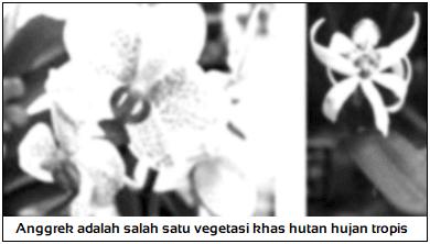 Flora Sumatra-Kalimantan