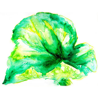 Rhubarb leaf watercolor painting