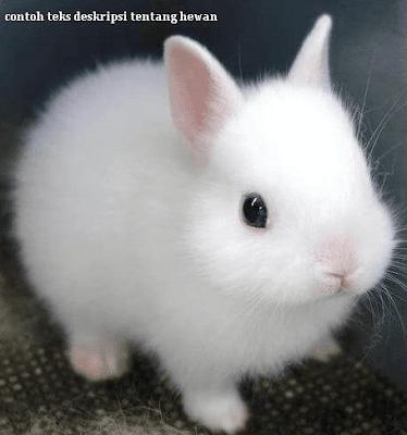 contoh teks deskripsi tentang hewan