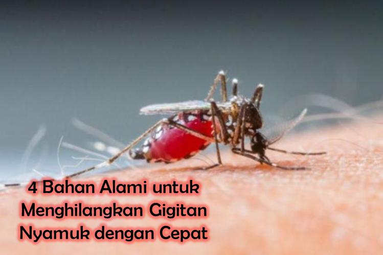 4 Bahan Alami untuk Menghilangkan Gigitan Nyamuk dengan Cepat