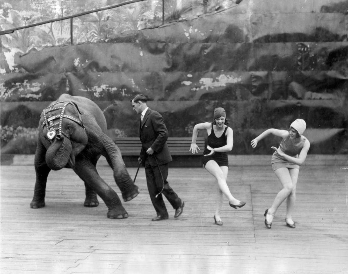 Dancing Elephant Joins The Charleston Usa 1926 Vintage