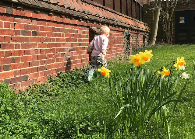 Daffodils in the foreground and a child running next to a red brick wall in the backgroun