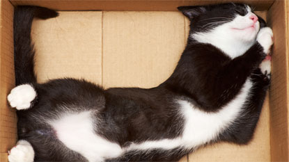 black-and-white cat stretched out inside cardboard box