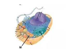 materi UN sel hewan