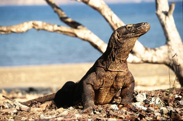 Tempat Terindah Pulau Komodo