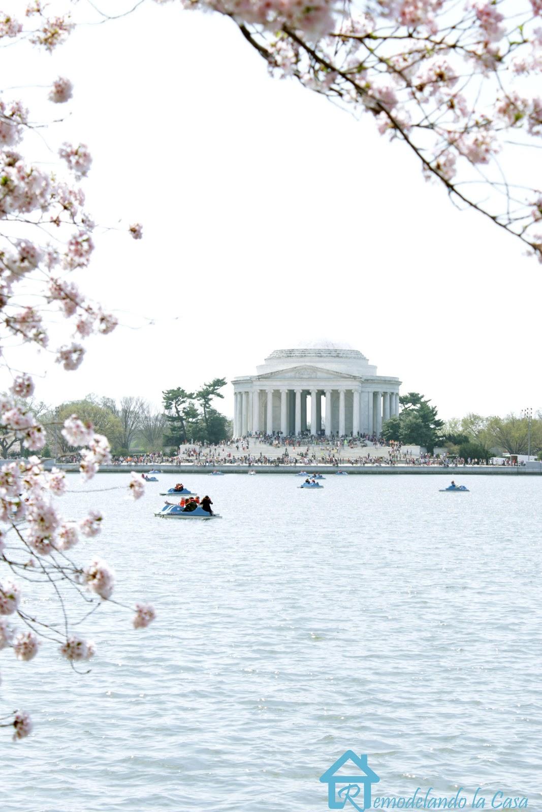 Jefferson memorial during cherry blossom festival in Washington DC