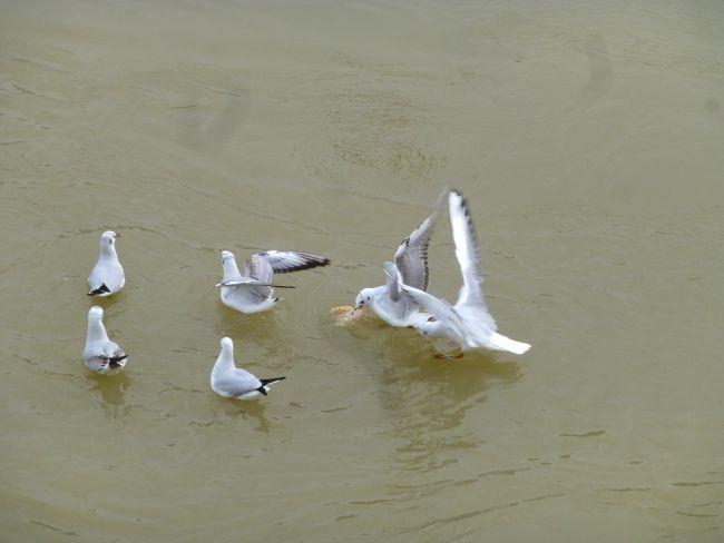 Birdies taking breakfast at the Seine