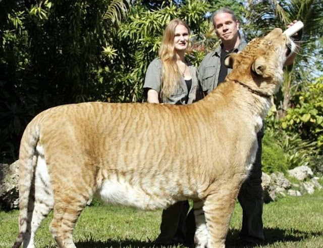 Most amazing Large animal