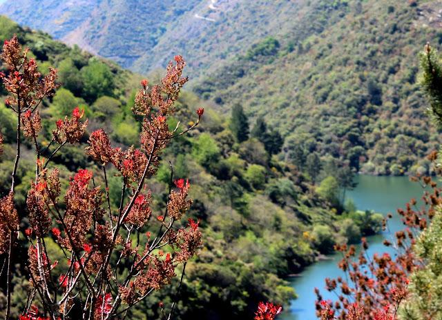 Miradores para contemplar el espectacular cañón del río Sil en la Ribera Sacra, provincia de Orense