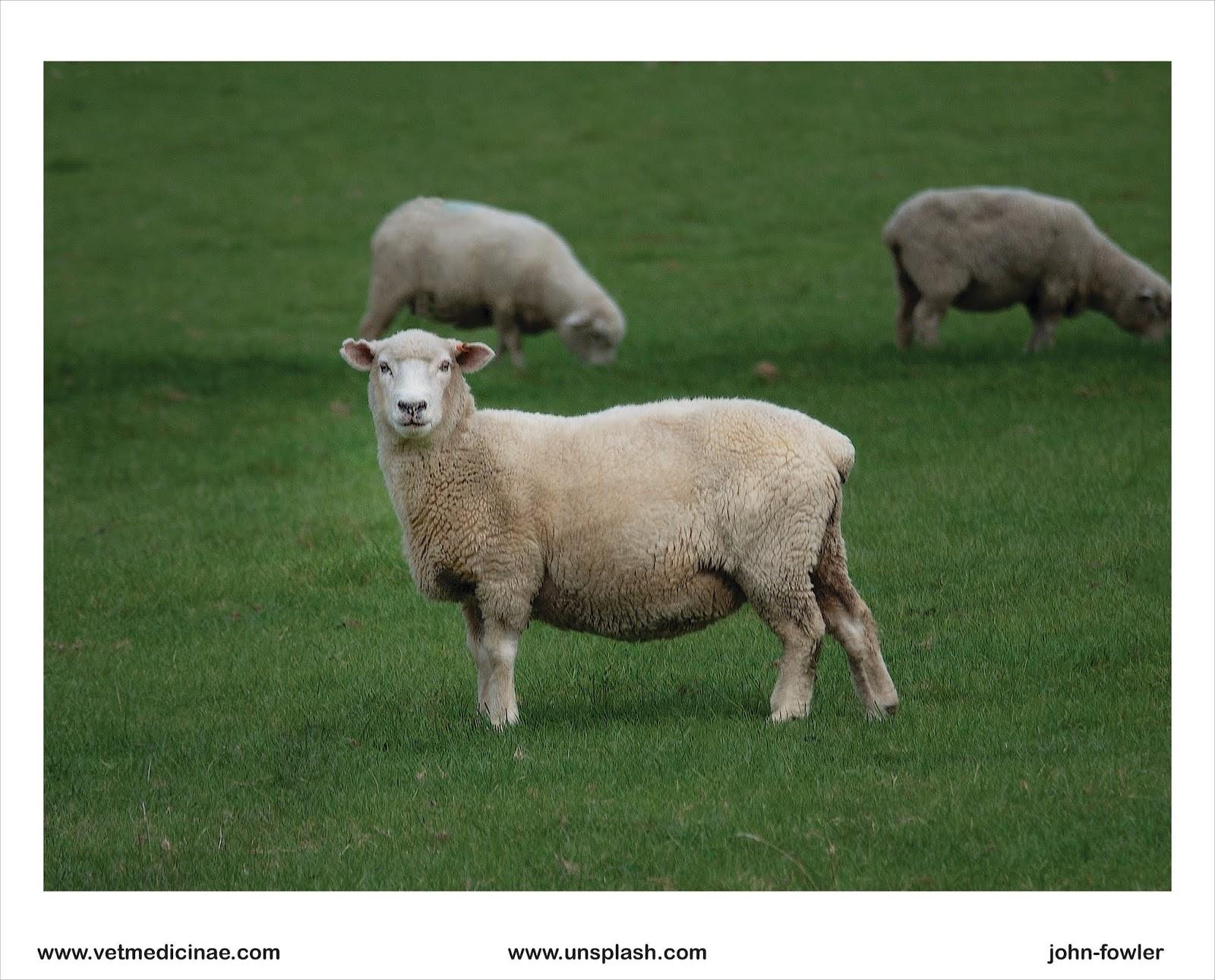 11++ Hewan ruminansia adalah hewan pemakan terbaru