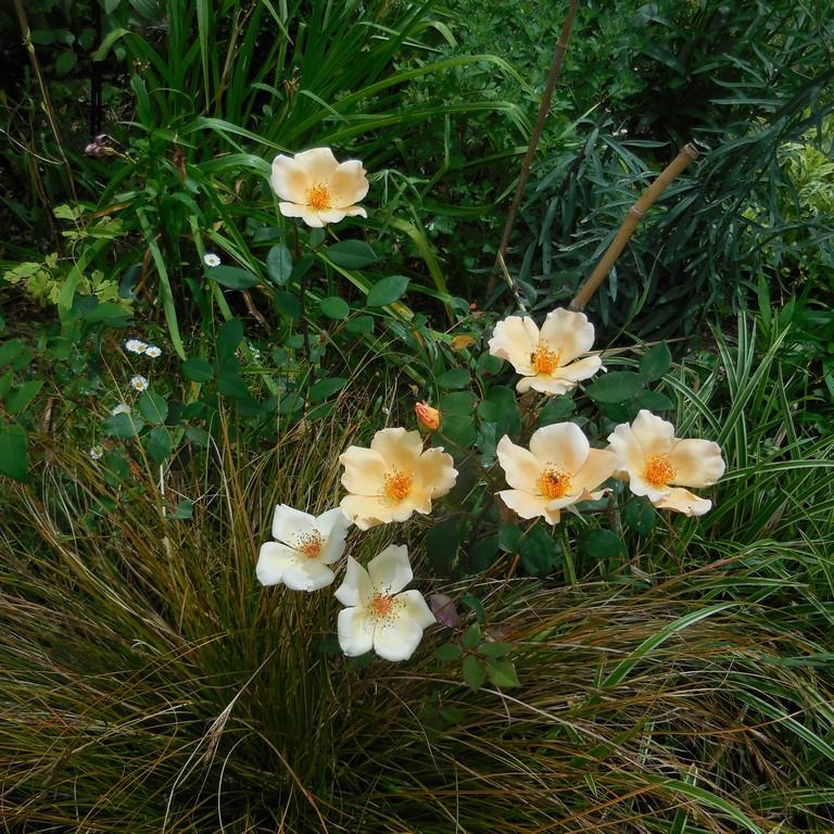 Cagouille 39 s garden juste quelques photos du jardin for Jardin 8686