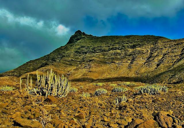 Playa de Cofete en Fuerteventura - Cardones, planta endémica.