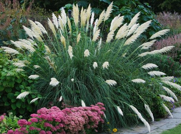 Пампасная трава и очитки