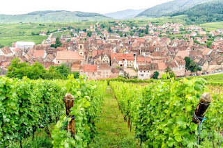 Vineyard and village in Alsace