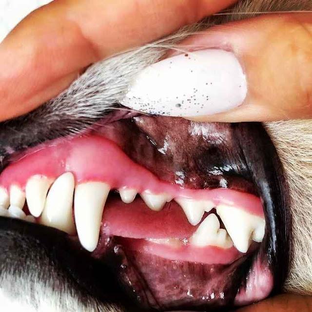 how often should you brush dog teeth