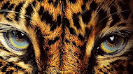 Jaguar Face Mobile Wallpaper