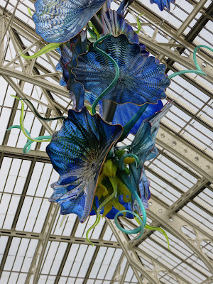 big blue glass flowers having from the roof  of a Victorian greenhouse (the temperate house at Kew)r
