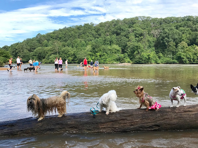 Whitewater Creek dog beach Atlanta