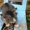 Jarang Lihat Bangkai Kucing yang Mati Dalam Kondisi Wajar? Ternyata Inilah Alasannya
