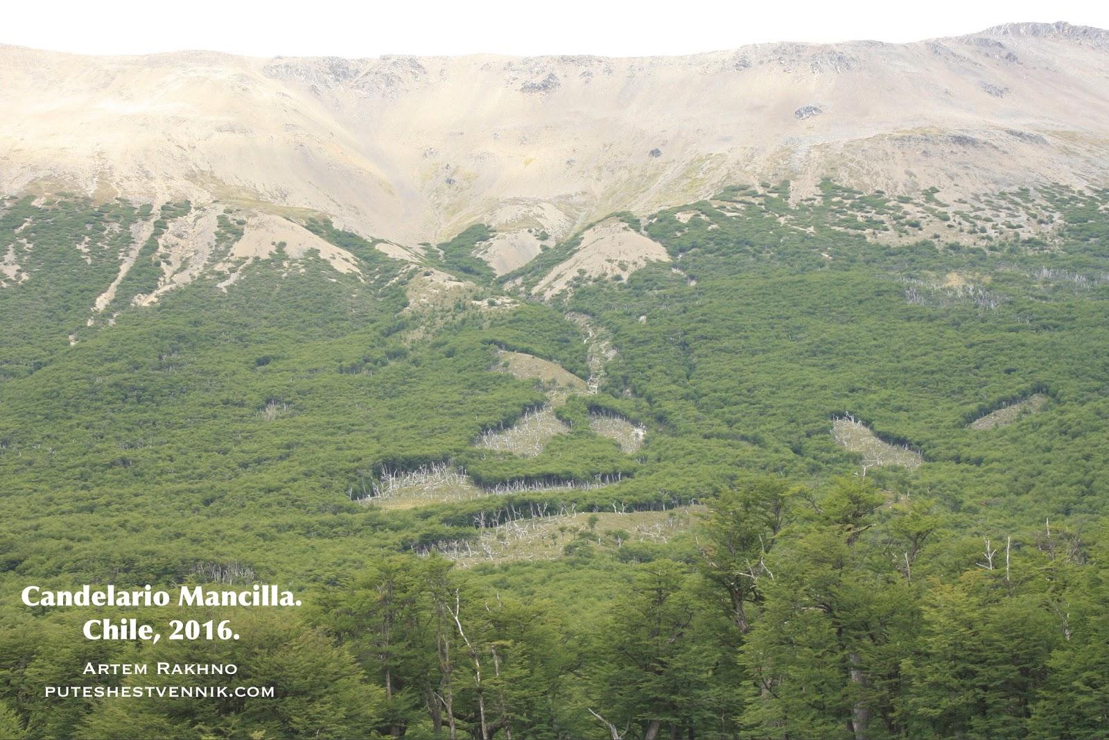 Лес в горах на границе Чили и Аргентины