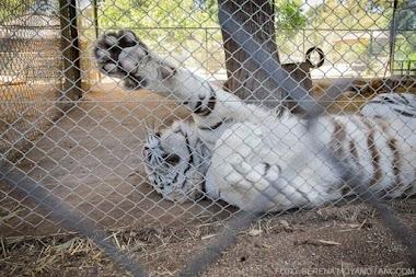 Basta de maltrato animal, merecen un lugar mejor