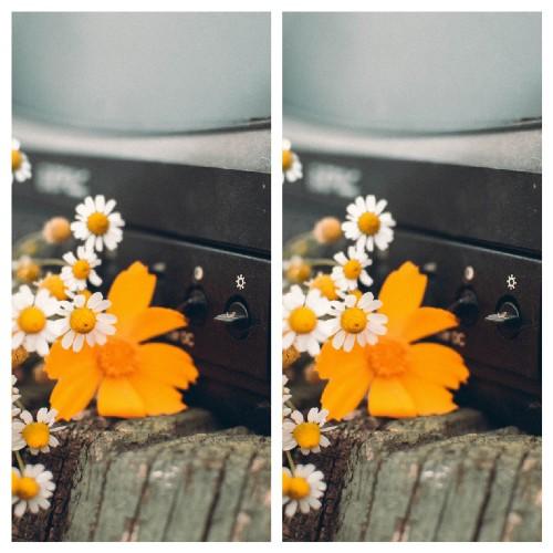 Webp Image Comparison