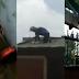 PANOORIN! | Pamilya na Hindi Nakakabayad ng Upa, Pinatanggalan ng Bubong ng May-ari