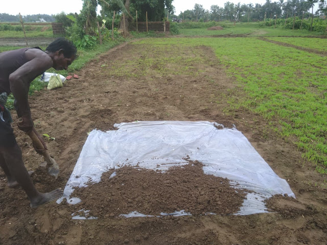 Mud layering for Paddy Seeds