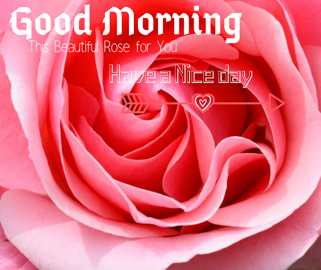Good Morning Images with Pink Rose