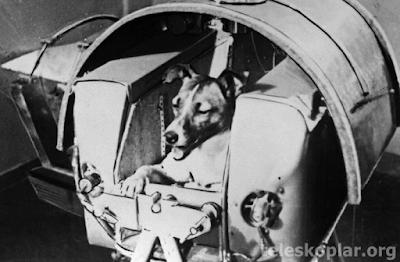 Uzaya fırlatılmak için hazırlanan bir köpek