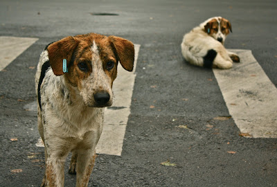 abandoned dogs in the philippines