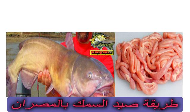 طريقة الصيد بالمصران (أمعاء الطيور) في النيل   صيد السمك بالمصران