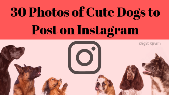30 Photos of Cute Dogs to Post on Instagram on The International Dog Day